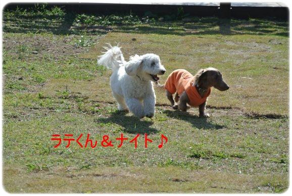 DSC_2249.jpg