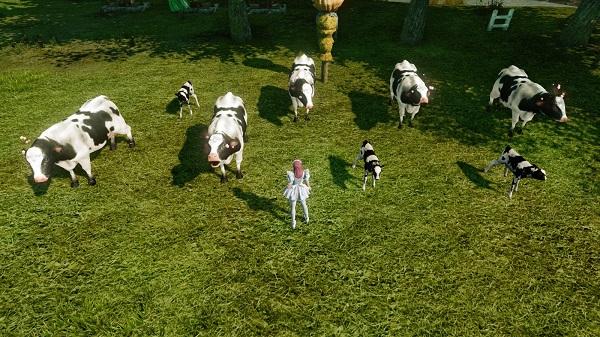 11月24日畑の牛