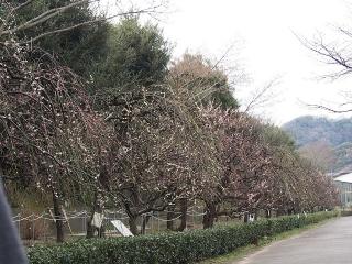 0312oofunafurawa-18.jpg