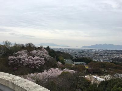 280404_hanami.jpg