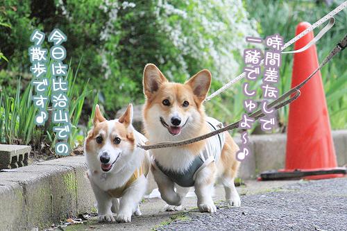 並んで散歩☆