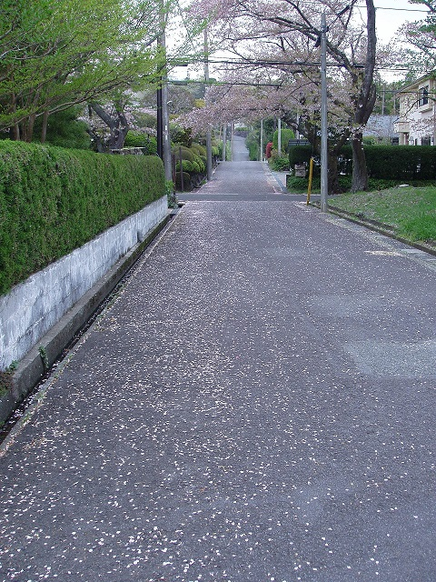 P4110016.jpg