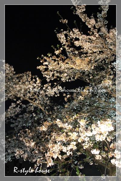 熊本城の桜4