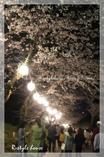 熊本城の桜8