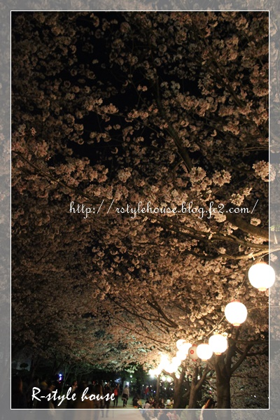 熊本城の桜9