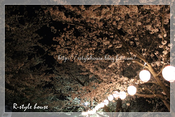 熊本城の桜10