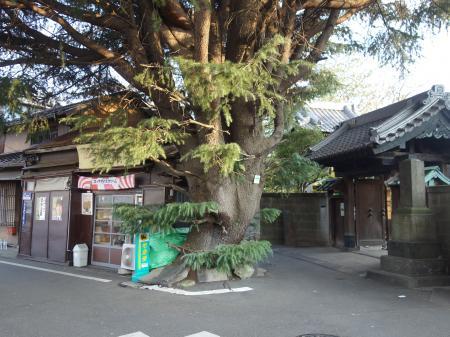 東京根津 (2)
