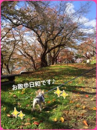 201511040954013d7.jpg