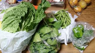 頂き物の野菜、白菜、ホウレン草、いんげん豆、ピーマン