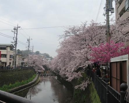 16-hanami1.jpg