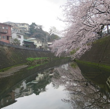 16-hanami5.jpg