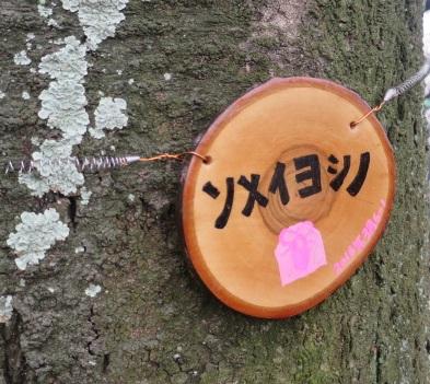 16-hanami7.jpg
