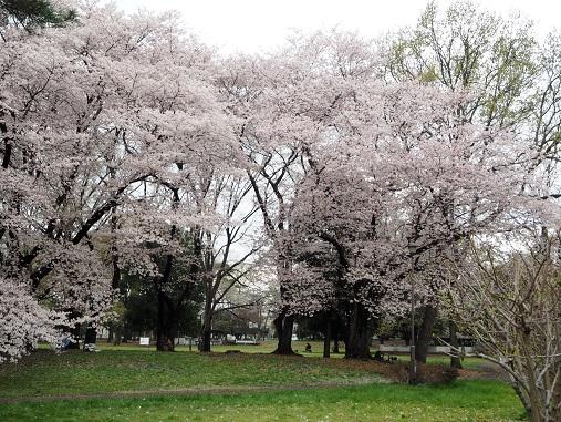 160403野川公園 (22)