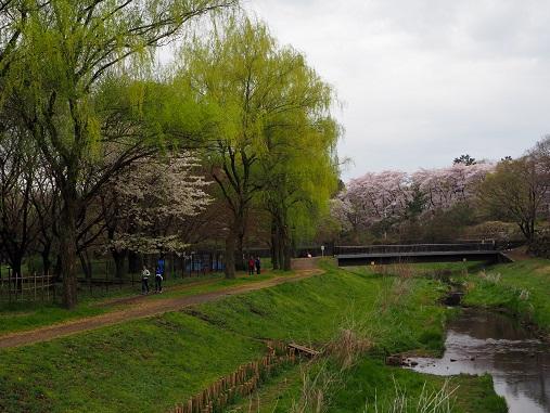 160403野川公園 (35)