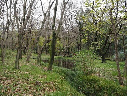 160403野川公園 (65)