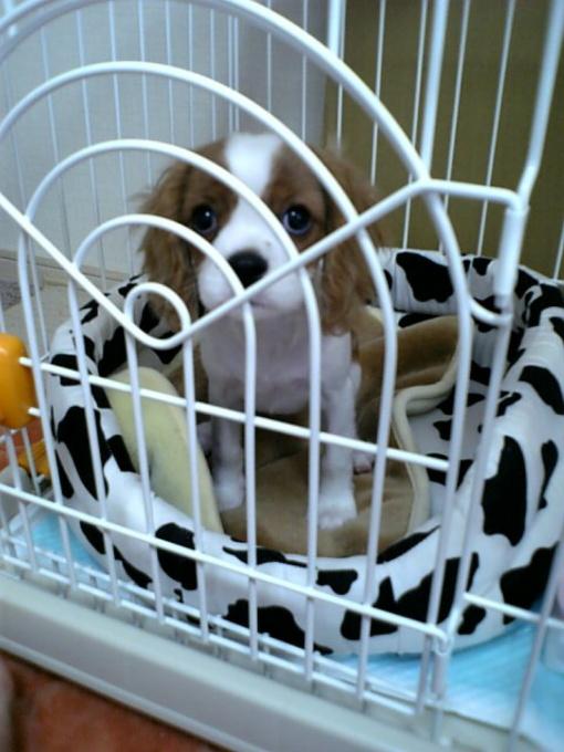 blog_2006-11-01 12-32DVC00023