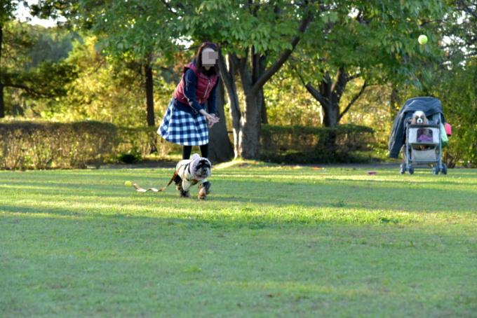 blog_DSC_0377_20151202173539e34.jpg
