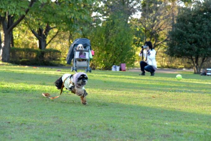 blog_DSC_0380.jpg