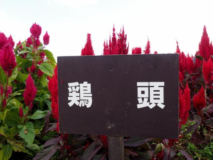 blog_PA059313.jpg