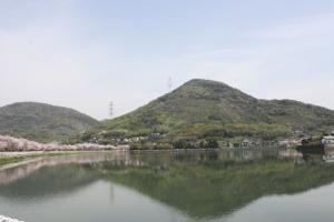 16鎌田池の桜3