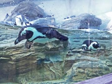 20151128-サンシャイン水族館 (47)-加工