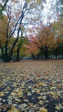 円山公園にて2