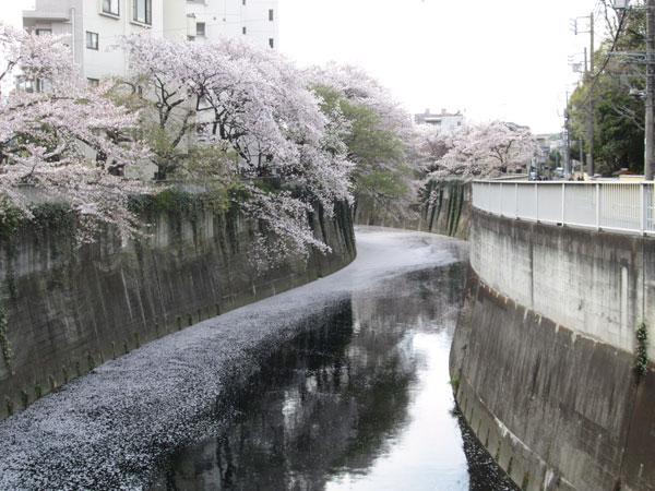 sakuratayori-2