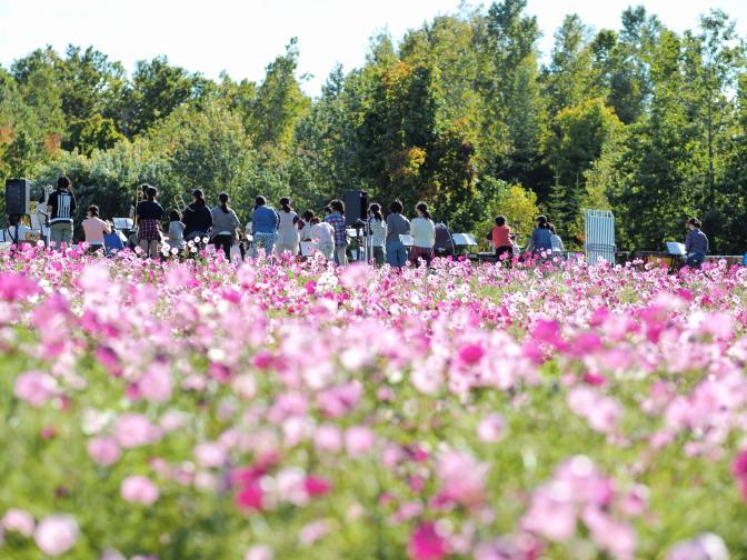 滝野すずらん公園コスモスフェスタ2015ミニコンサート