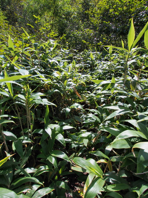 笹が茂ってほとんど藪漕ぎ状態