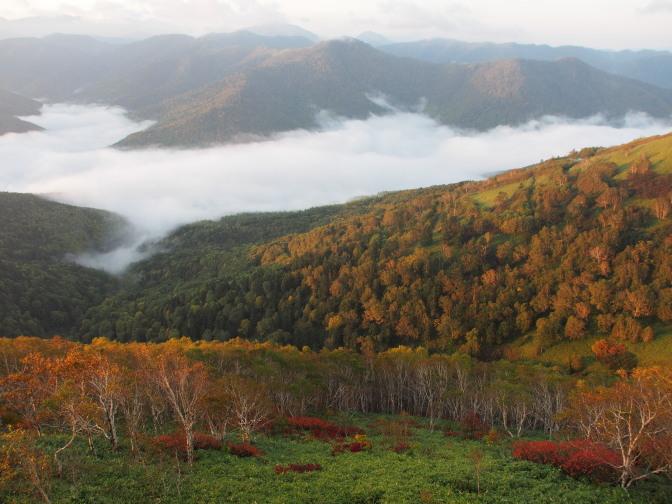 朝日を浴びて色づくトマムの山々。紅葉も美しい