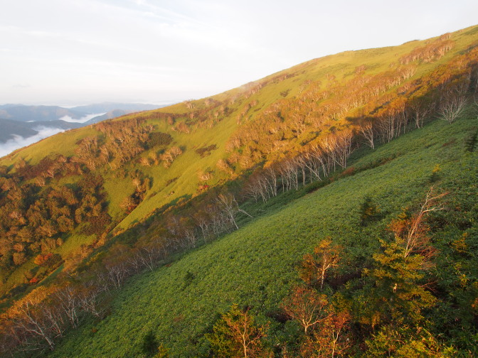 ダケカンバが多く見られる亞高山帯の特徴的な植生