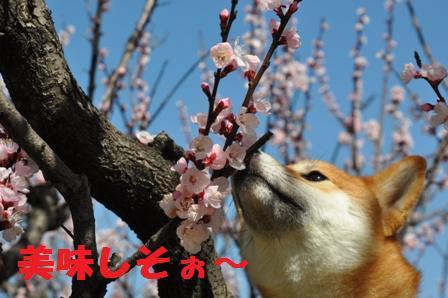 blog10695.jpg