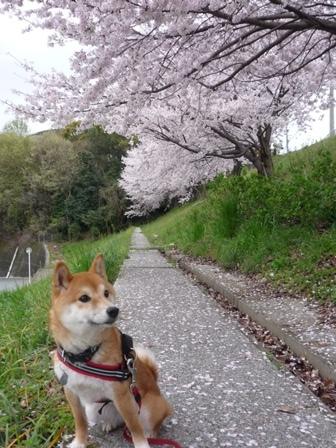 blog10746.jpg