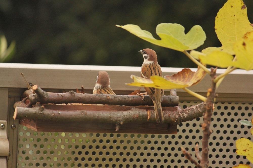 151210bird_feeder
