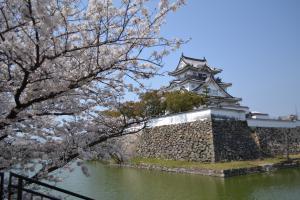 岸和田城の桜まつり001
