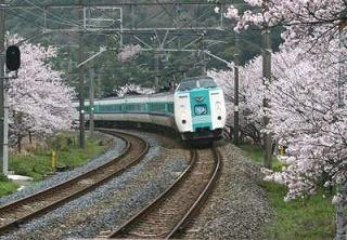 山中渓の桜風景001