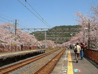 山中渓の桜風景002
