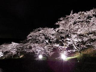 山中渓の桜風景003