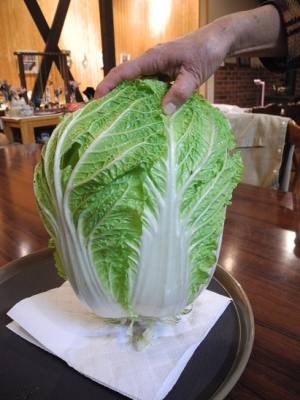 20151119自家製巨大白菜