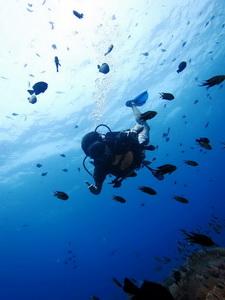 diving_02_2015101315443633c.jpg