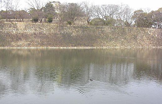 大阪城のカモ2016-3