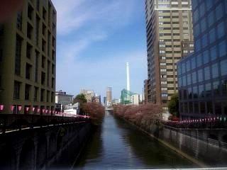 20150412目黒川(その2)