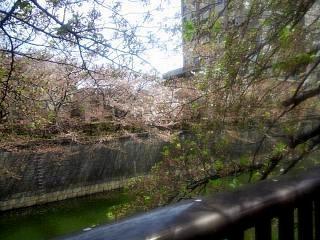 20150412目黒川(その3)