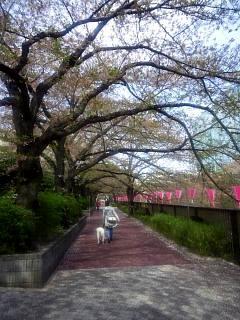 20150412目黒川(その4)