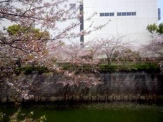 20150412目黒川(その12)
