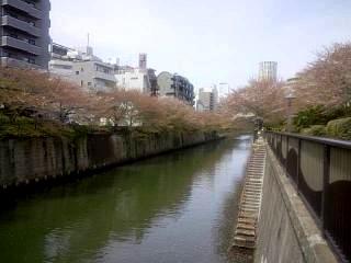 20150412目黒川(その16)