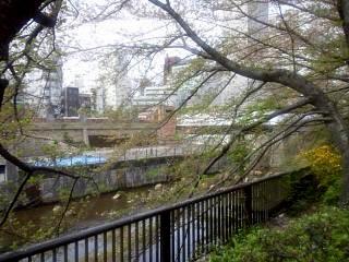 20150412目黒川(その23)