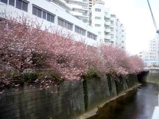 20150412目黒川(その25)