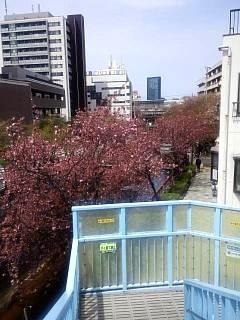 20150412目黒川(その30)