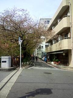 20150412目黒川(その39)